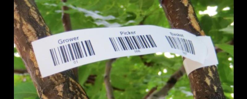 augu etiketes
